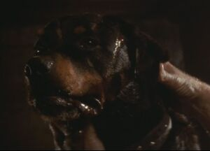 357px-Spike the dog