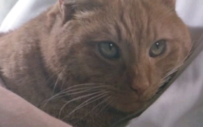 File:410px-Jones the cat.png
