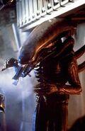 1979 The Alien