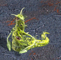 File:Venom Spawn.png