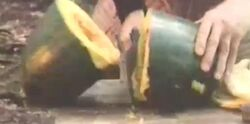 Riverfruit