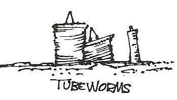 File:TubeWorms.JPG