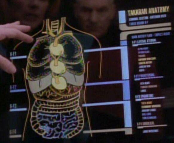 File:Takaran anatomy.jpg