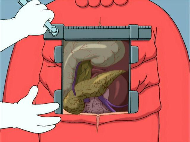 File:Decapodian Organs.jpg