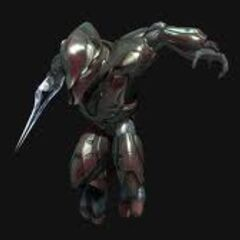 Sangheili Special Operations