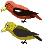 Holsaeter's Crossbills