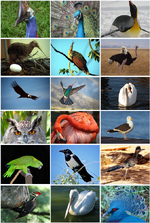 Bird Diversity 2011