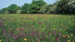 Grassland pic