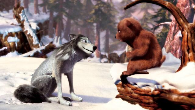 File:Bear-cub-meets-Humphrey-alpha-and-omega-16370910-1400-788.jpg
