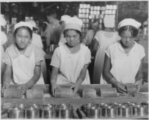Food-Hawaii-Canning. Native girls packing pineapple into cans. - NARA - 522863.tif