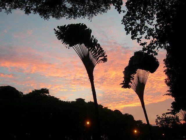 File:SDP Sunset01 (VegWorld).JPG