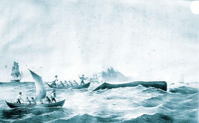 File:Whaling-drawingblue.jpg