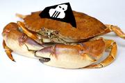 Cpt crabcakes