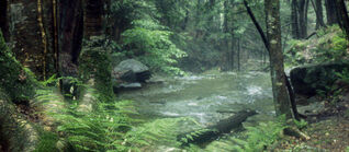 Forestcounty