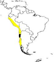 Polynesiachile