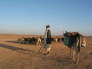 Desert Herder