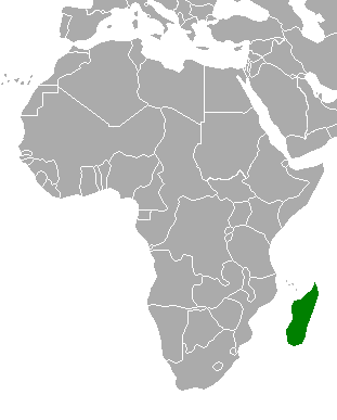 File:Location of Madagascar (Myomi).png