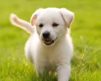 File:PuppySmall.jpg