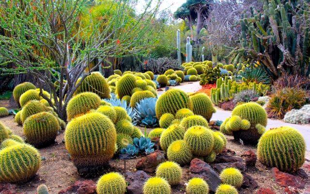File:Desert Wortlorish Gardens.jpg