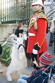 File:William windsor (goat).jpg