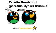 Perotia Bomb Bird of Paradise EXCLUSIVE