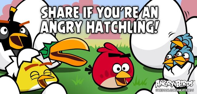 File:Angry Hatches.jpg