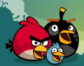 Black bird error