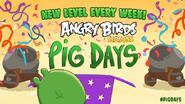 Pig Days A