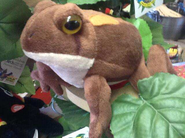 File:Rob biting frog.jpeg