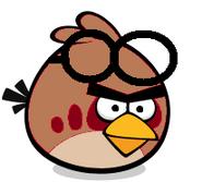 Brown Goggle Bird