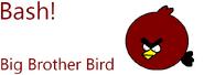 Bash Big Brother Bird