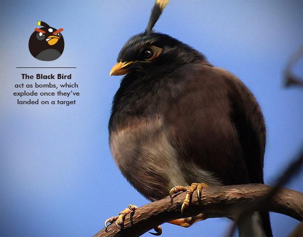 File:Real Blacky.jpg