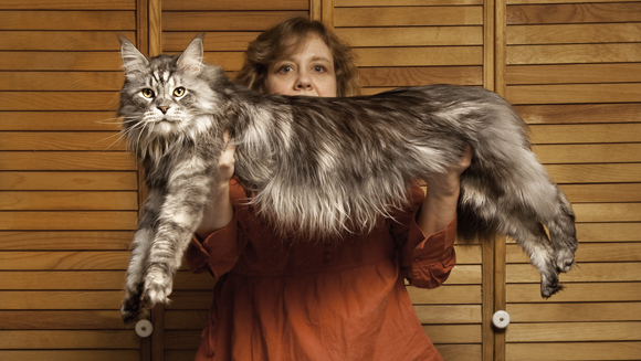File:Stewie - Longest Cat.jpg