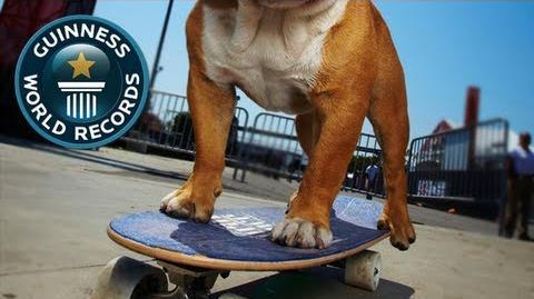 Skateboarding Dog - Tillman! - Guinness World Records