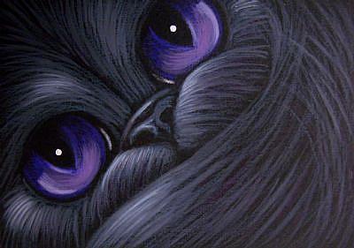 File:BLACK-PERSIAN-CAT-VIOLET-EYES.jpg
