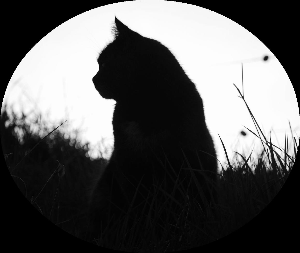 silhouetteclan animal jam clans wiki fandom powered by wikia