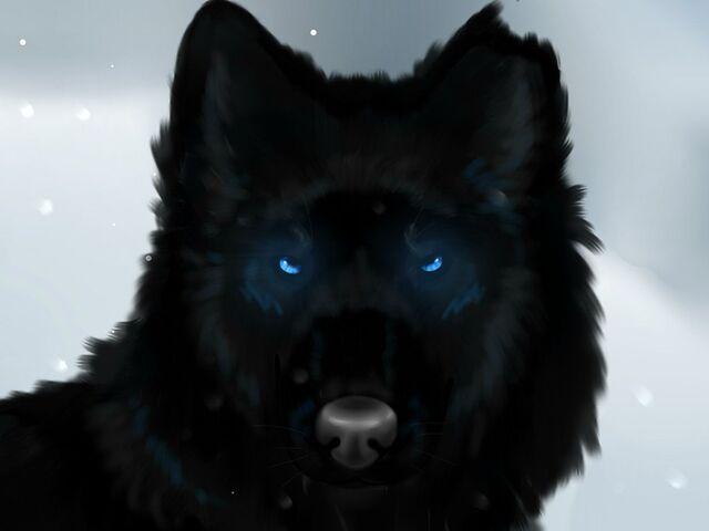File:That black wolf by phoenix19xp-d737h9f.jpg