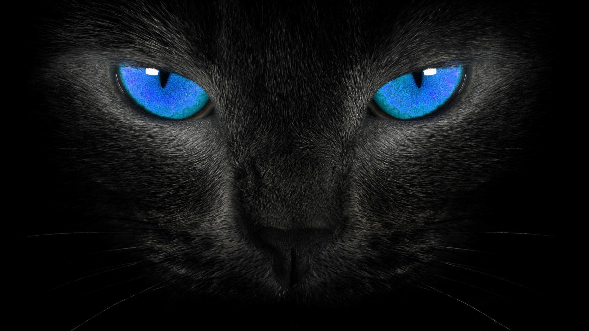 image - hd-wallpapers-blackblue-wallpaper-black-cat-blue-eyes