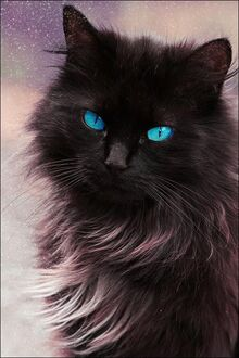 Amazing-cats-blue-eyes-pretty-cat-kitten-pictures-pics