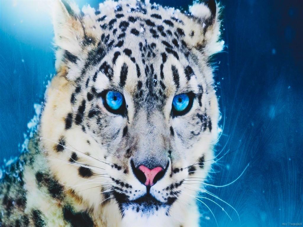 white cheetah wallpaper hd - photo #45