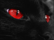 Black-cat-red-eyes