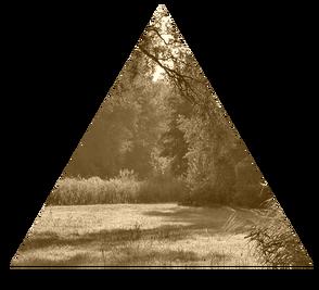 Forestclearinginsummer-beautifulnaturewallpaper-freecomputerdesktopwallpaper 1024