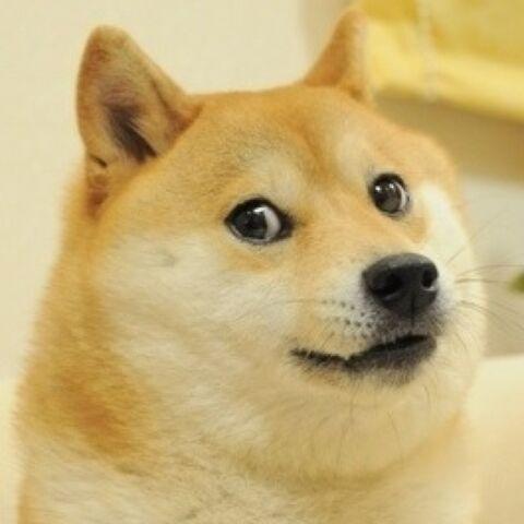 File:Doge.jpeg