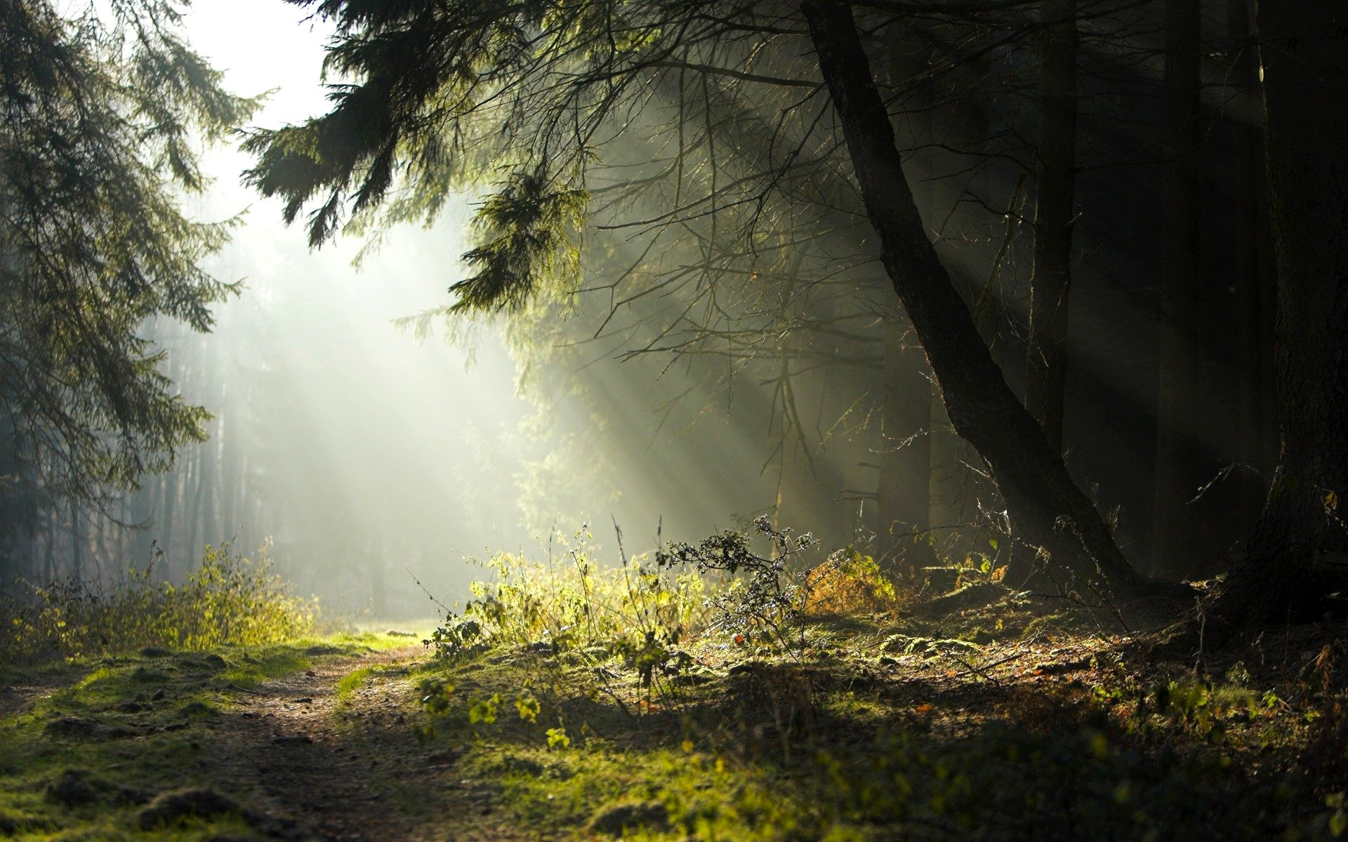 Image Sun In Forest Clearing Wallpaper Background 54508