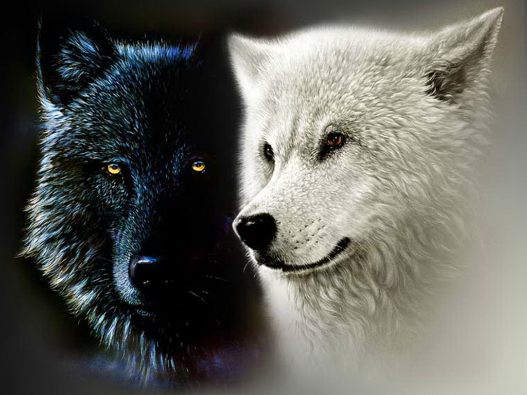 Who Is The White Wolf? About The New Character In 'Black ...