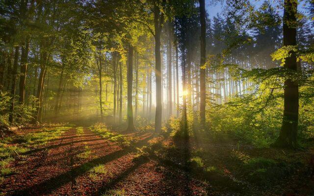 File:Summer-forest-morning-scenery-desktop-3840x2400-1024x640.jpg