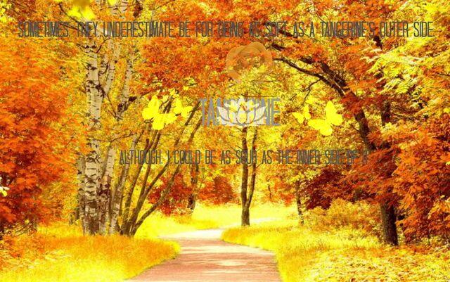 File:TangerineBanner.jpg