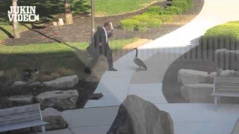 Goose Attacks Businessman