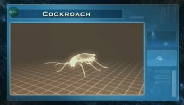 File:2nd cockroach.PNG