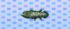 Coelacanth new leaf
